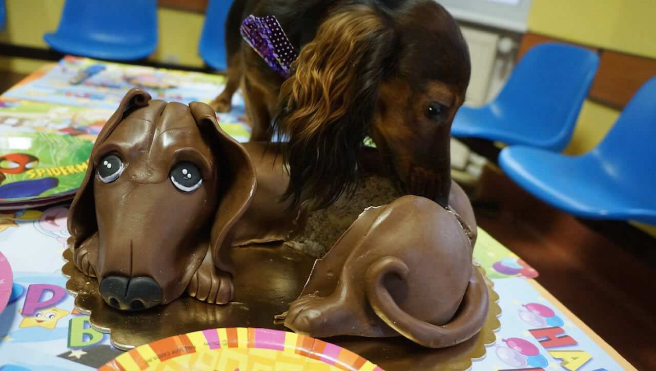 """Po czym rzekła """"psom czekolada szkodzi"""" i ratując im życie cały zjadła sama."""