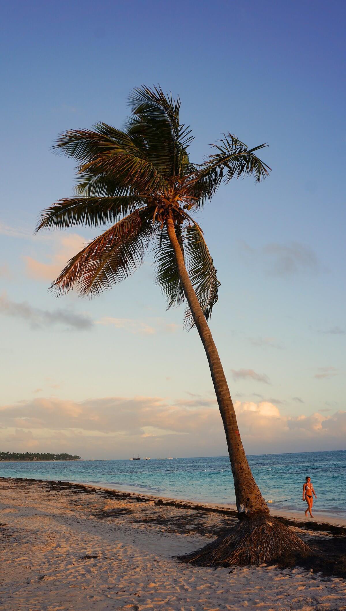 To zdjęcie dobitnie pokazuje, jak wysokie są tutaj palmy.