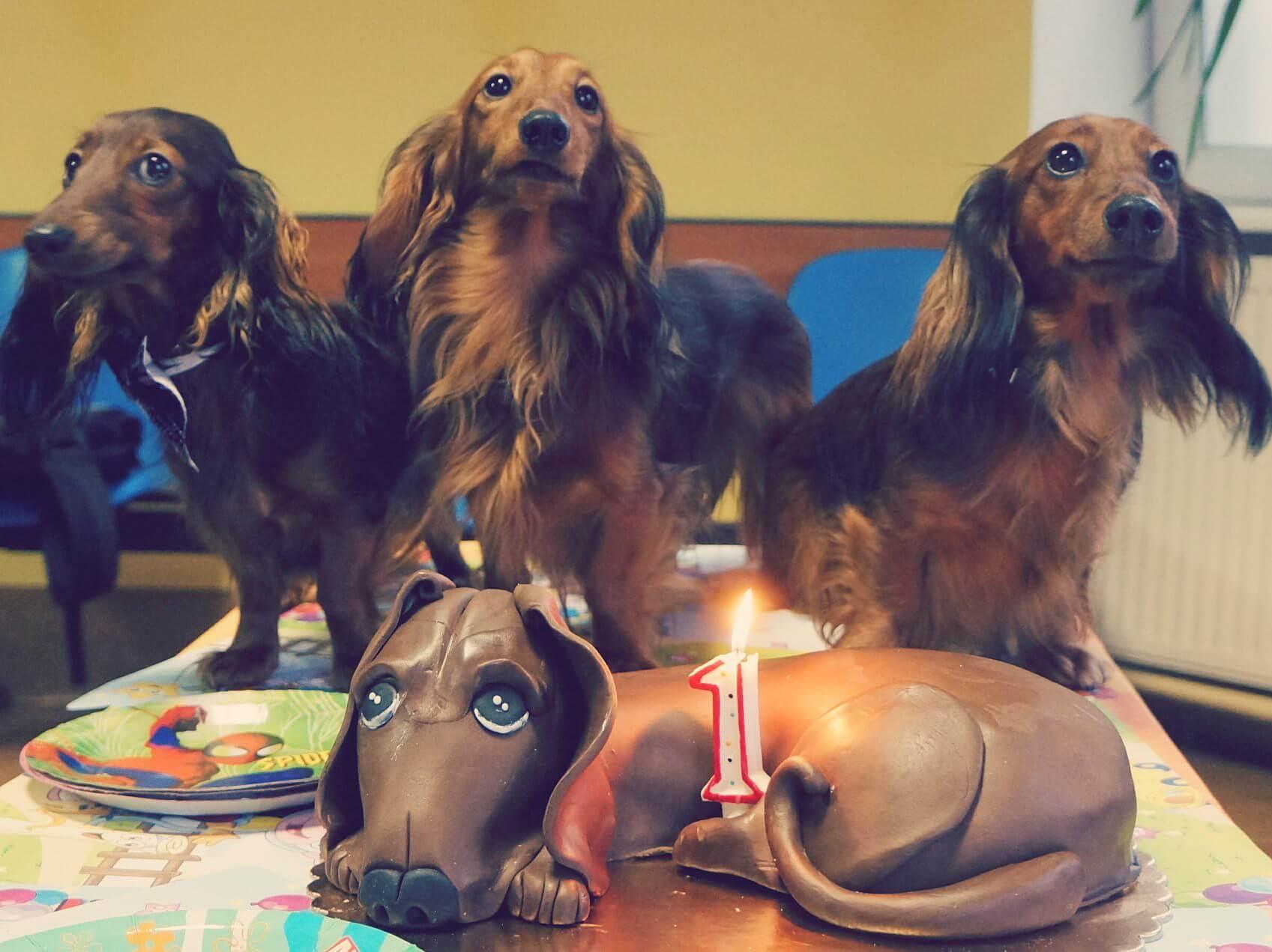 Piesia nie jest taką egoistką, na jaką wygląda i na swoją imprezę zaprosiła bezdomne, głodne jamniki.