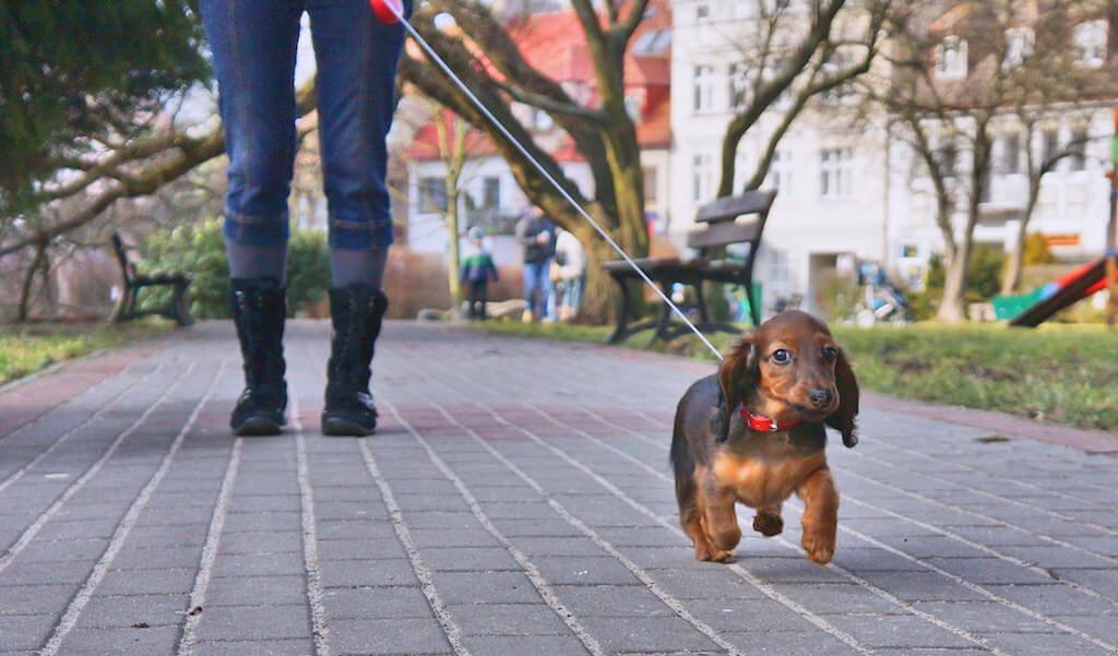Pierwszy spacer z mamą. Jeszcze nie za bardzo wiedziała jak się chodzi, ale już wzrokiem wodziła za kamerą.