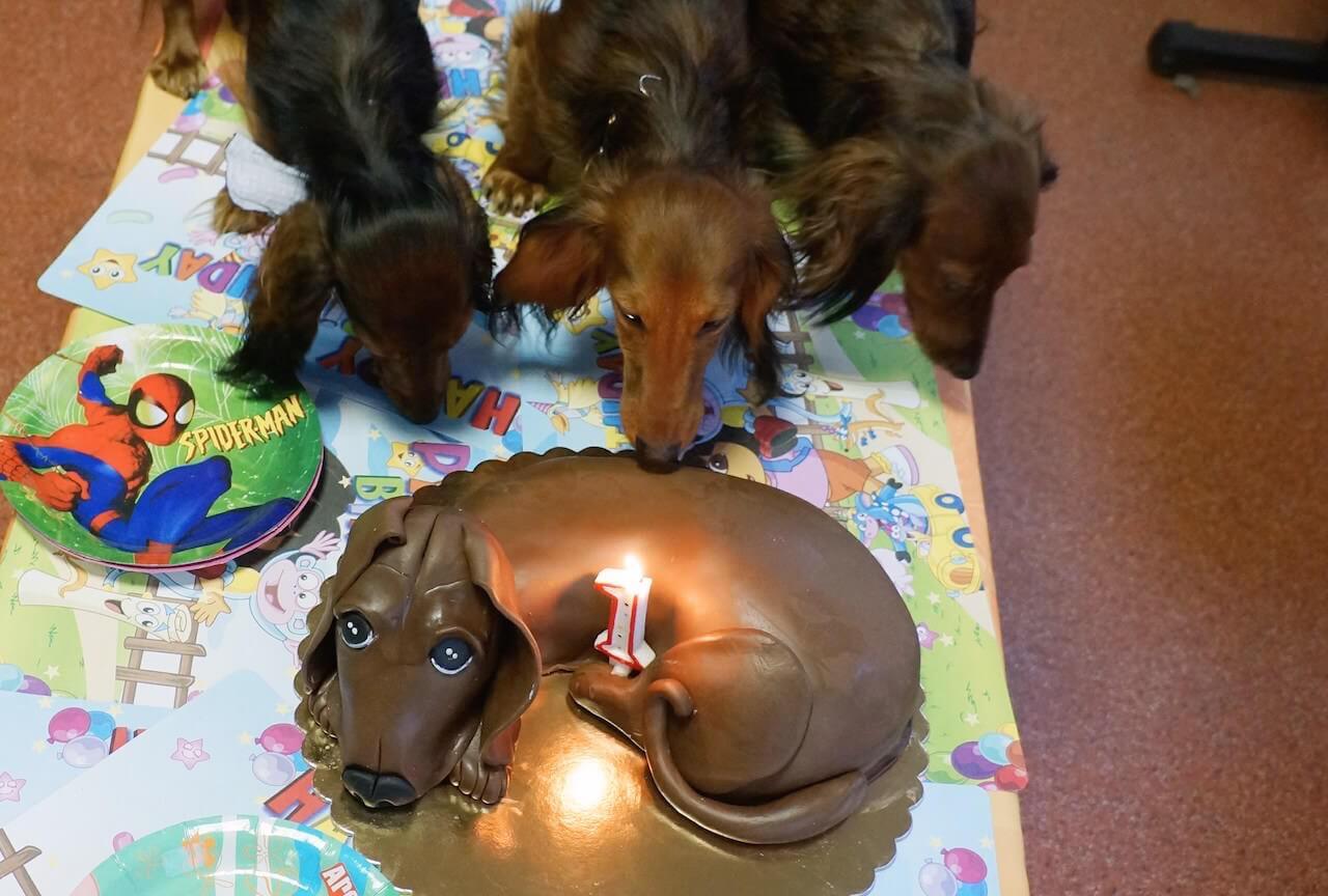 Dała im powąchać tortu.
