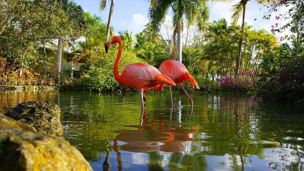 A następnie kilka godzin spędziłem leżąc na trawie z aparatem w ręku. Mam dużą cierpliwość do zwierzątek, potrafię bardzo długo czekać, aż ustawią mi się odpowiednio do zdjęcia. Niestety flamingi i pawie mają nawyk odwracania się od gapiów.