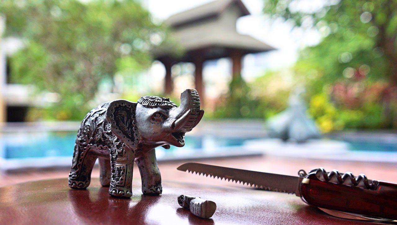 slon-tajski-swiety